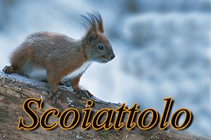 scoiattolo-anteprimajpg