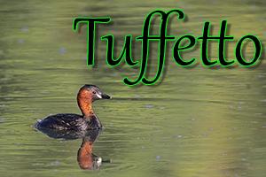 Tuffetto-anteprimajpg