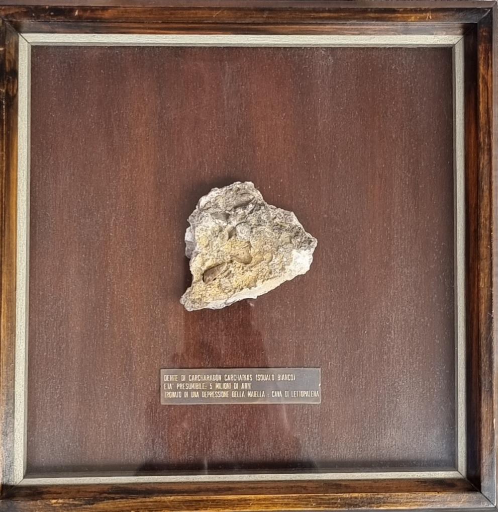Fossile Lettopalenajpg