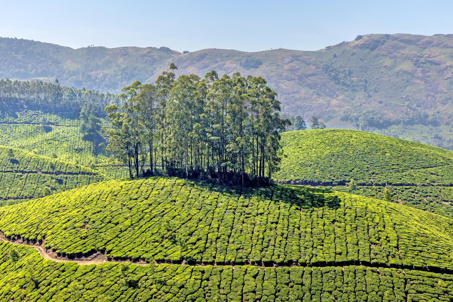 le colline di Munnarjpg