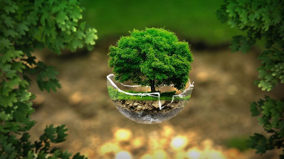 environment-2196690_960_720jpg