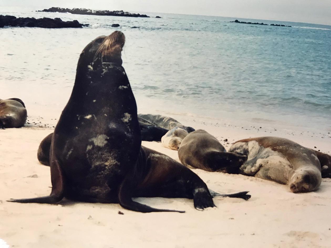 Leone marino haremjpg