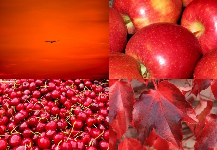 foto rosse - Copiajpg