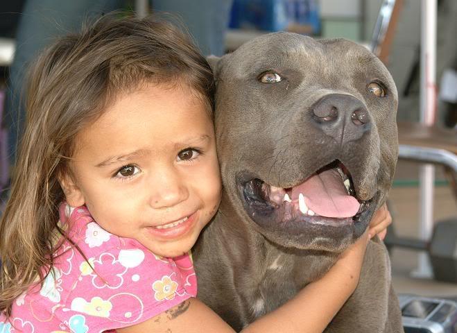 Risultati immagini per pitbull con bambini