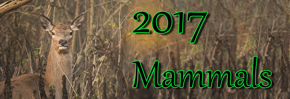 amb 2017 mammalsjpg
