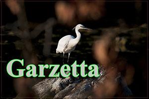 Garzetta-anteprimejpg