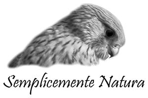 logo Lucajpg