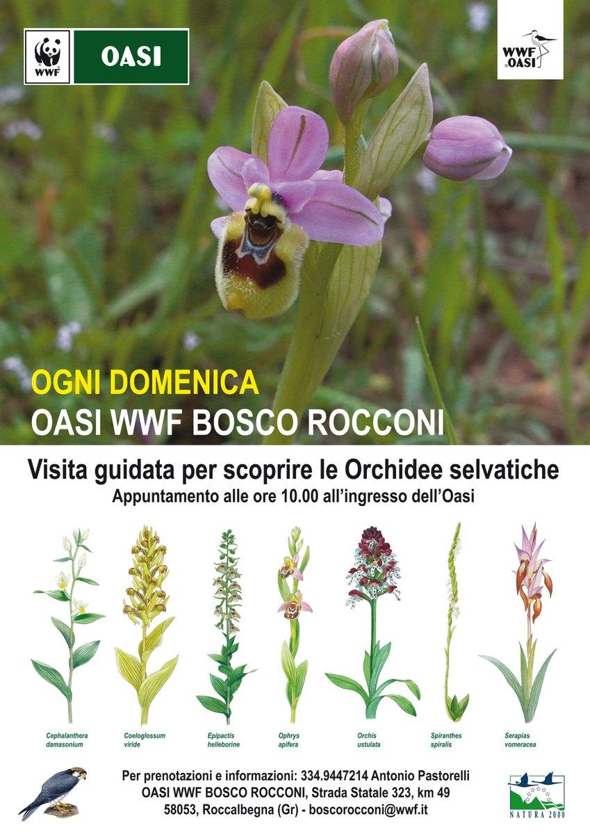 Oasi Bosco dei Rocconi Visiajpg