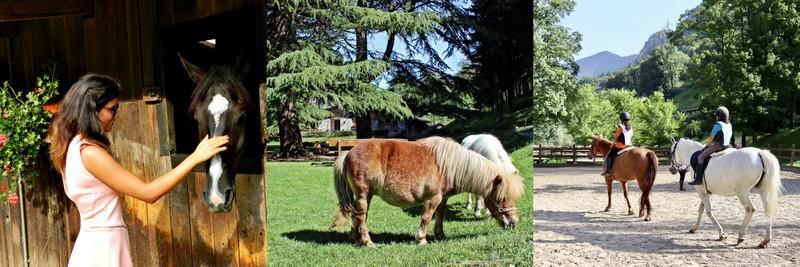 ferdy equitazionejpg