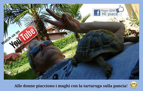 la tartaruga che volajpg