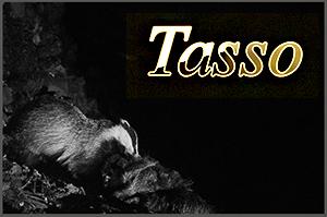 tasso-anteprimajpg