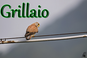 Grillaio-anteprimajpg
