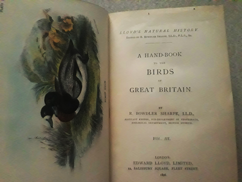 Birds of Great Britain vol. III - 1896 - 35 Chromolito originali
