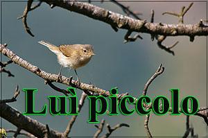 Lupiccolo-anteprimajpg