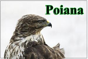 Poiana-anteprimajpg