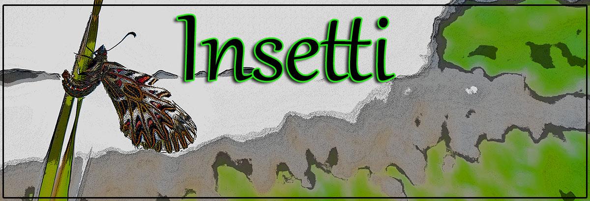 amb insettijpg
